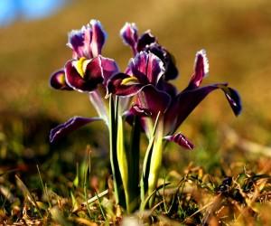 Nevruz ya da Newroz olarak bilinen gün nedir (2) nevruz ya da newroz olarak bilinen gün nedir